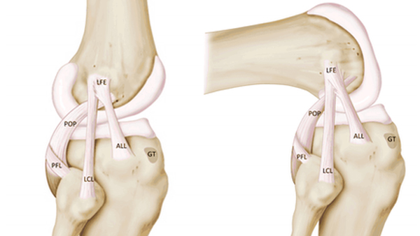 Knee-Ligaments